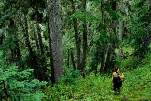 Bushwack Hiking Tips