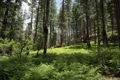 Hiking Sedona Arizona West Fork Trail