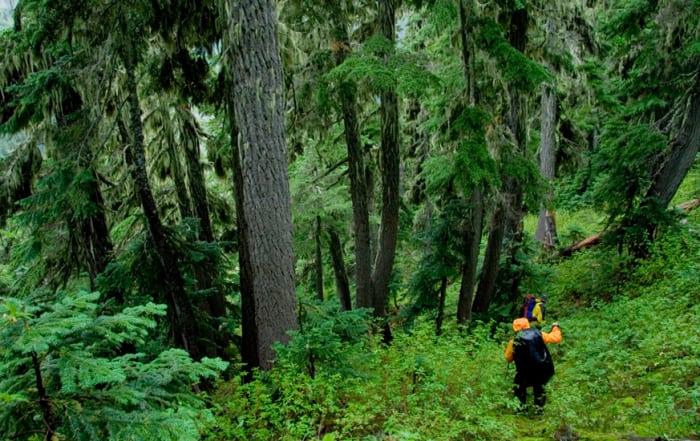 Bushwacking Wilderness Hiking Tips