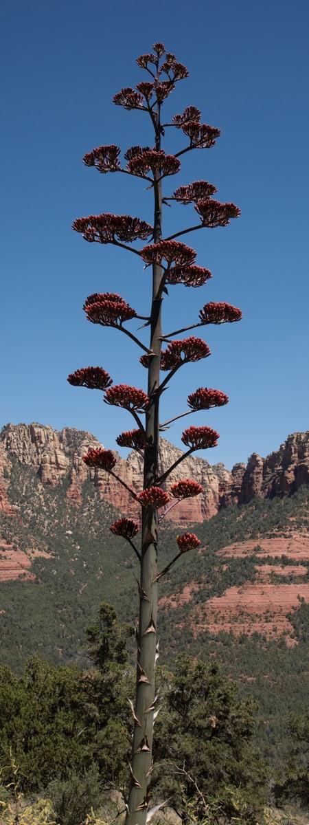 Brins Hiking Trail - Sedona Arizona