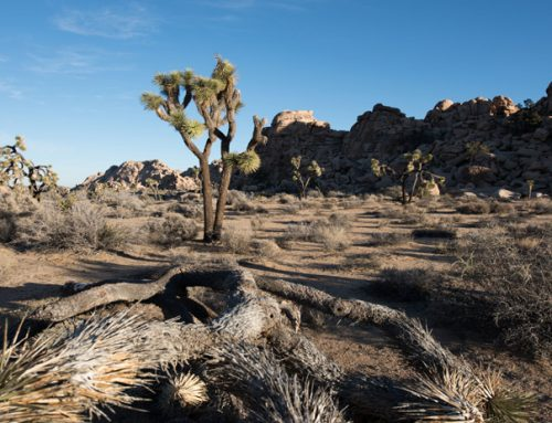 Experiencing Joshua Tree National Park